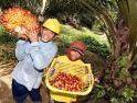 Melawan Kampanye Hitam di Balik Industri Besar Sawit