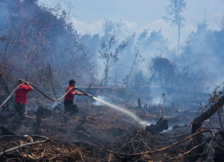 Photo of Walhi Pantau Proses Hukum Karhutla