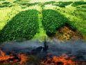 Paru-Paru Dunia Terbakar, Paru-Paru Masyarakat Meradang