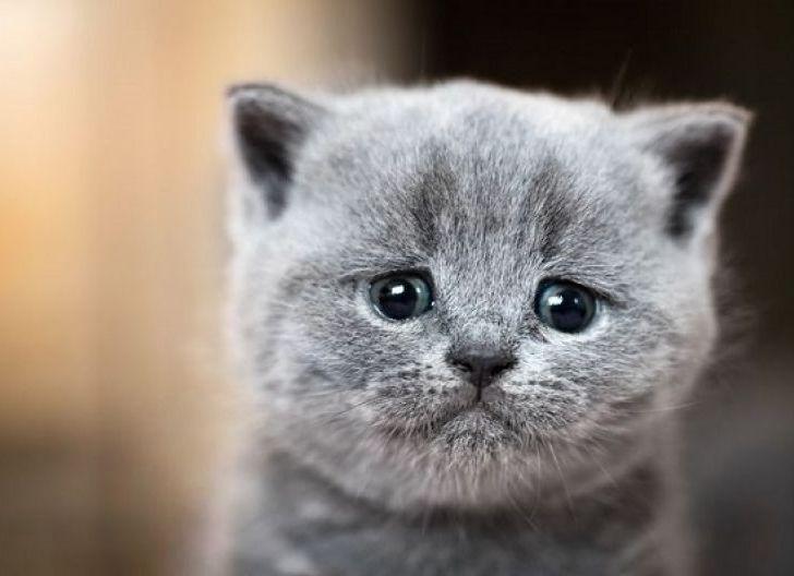 Empat Mata Kucing Ditusuk Suarapemredkalbar Com