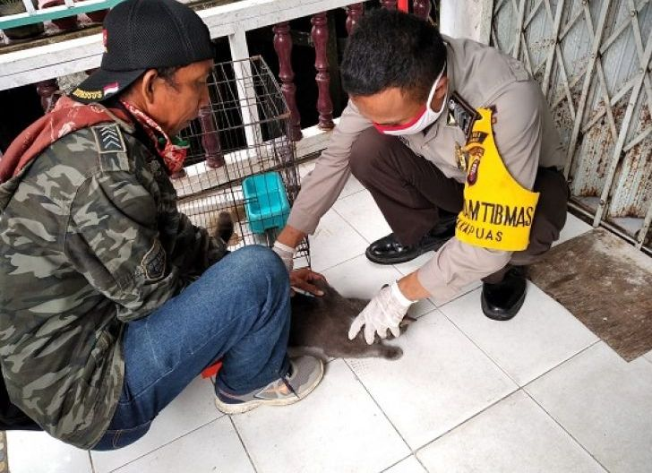 Photo of 6.464 Hewan di Sanggau Divaksin Rabies, 336 Kasus Gigitan HPR per 13 Juni 2020
