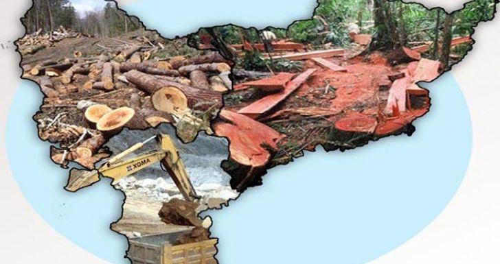 Illegal Logging dan Mining Diam-diam Marak di Kalimantan Barat