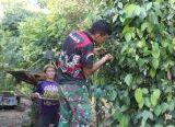 Photo of Kebun Lada Ibu Marisa jadi Sasaran Komsos Anggota Satgas TMMD Reguler Ke-108 Kodim 1203/Ktp