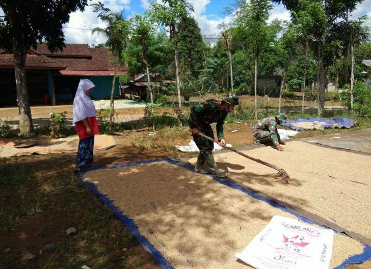 Photo of Anggota Satgas TMMD Ke-108 Membantu Warga Jemur Padi