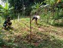 Anggota Satgas TMMD Bantu Warga Bersihkan Rumput Di Kebun Timun