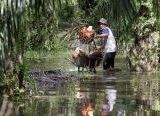 Photo of Isu Negatif Ancam Sektor Industri Kelapa Sawit