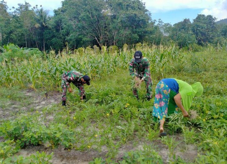 Photo of Satgas Yonif 642/Kps Bantu Warga Panen Buah dan Sayur