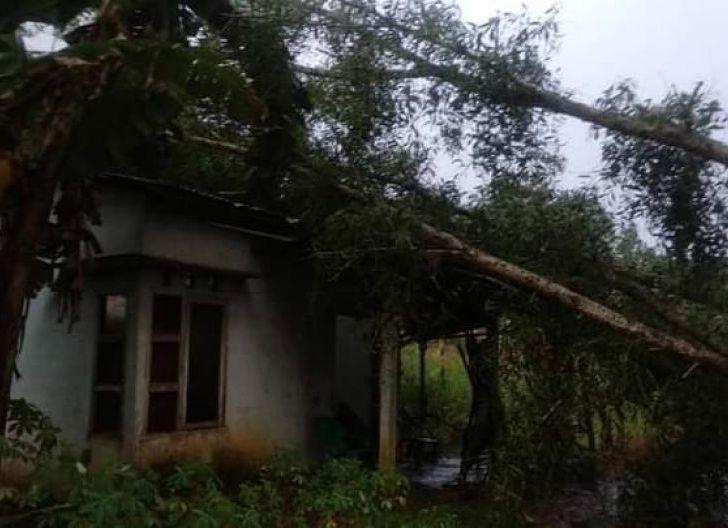 Photo of Atap Rumah Warga di Sungai Naram Hancur di Timpa Pohon Akasia