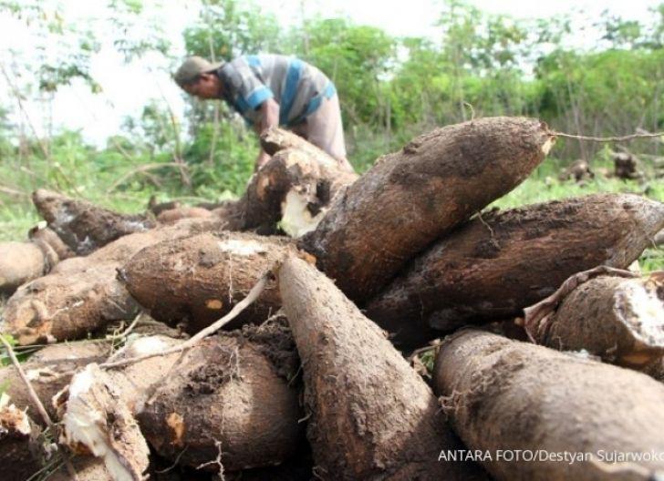Photo of Bina Petani dan Buka Keran Pasar dalam Mendukung Proyek Pengembangan Ubi Kayu