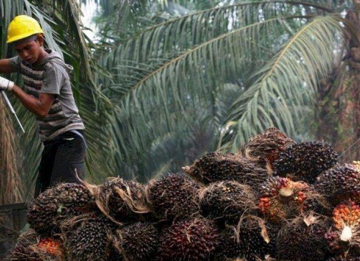 Photo of Kuota Ekspor CPO Indonesia Masih Diungguli Malaysia
