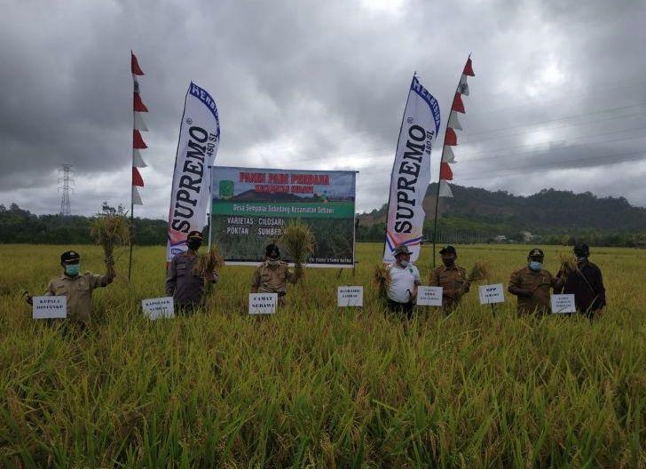 Photo of Poktan Sumber Harapan Panen Padi Cilosari,Satu Hektare Hasilkan 4,5 Ton