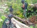 Saat Patroli Batas, Satgas Yonif 407/PK Temukan Kayu Hasil Pembalakan Liar