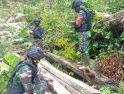 Patroli Tapal Batas Negara, Satgas Pamtas Yonif 407/PK Temukan Kayu Hasil Pembalakan Liar