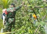 Photo of Babinsa Koramil 1208 -03/Tebas Dukung Kegiatan Pertanian