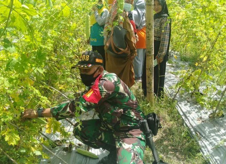 Photo of Sertu Agus Subroto Dampingi Ibu PKK Budidaya tanaman Sayuran