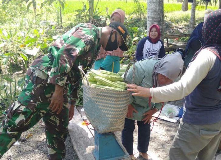Photo of Dukung Potensi Wilayah Babinsa Serindang Motivasi Petani