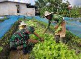 Photo of Ketahanan Pangan, Brigif 19/Kh Dampingi Petani Sayur