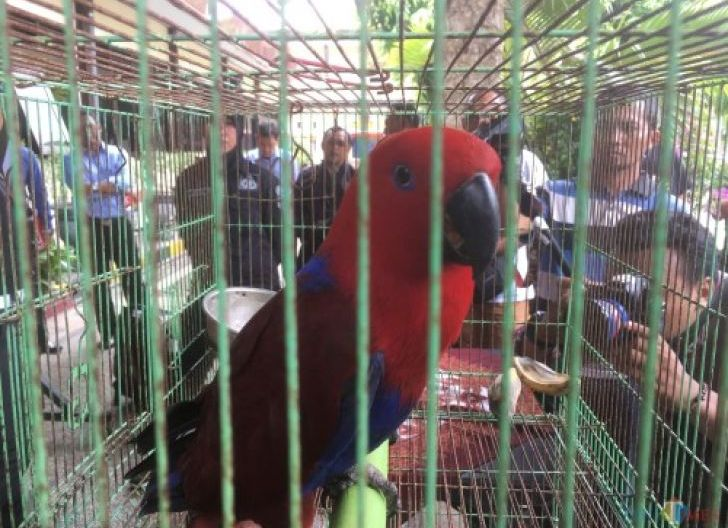 Photo of Kasus Perdagangan Satwa Dilindungi, Jumardi Dipenjara Empat Bulan 20 Hari