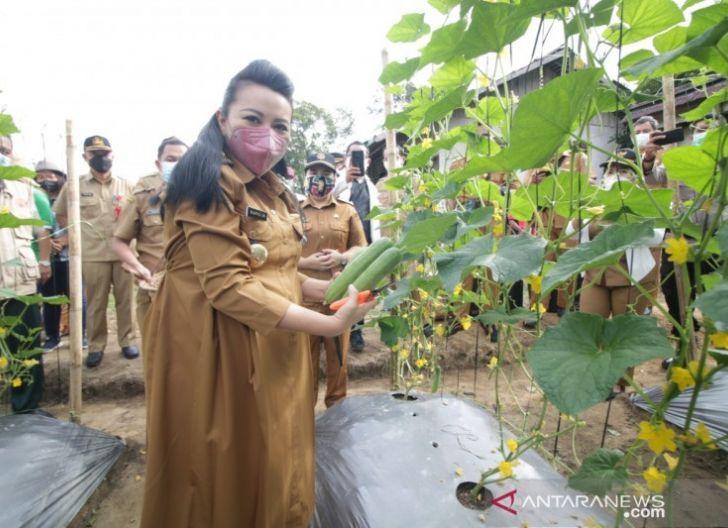 Photo of Bupati Ajak Warga Tanam Sayur di Pekarangan Rumah