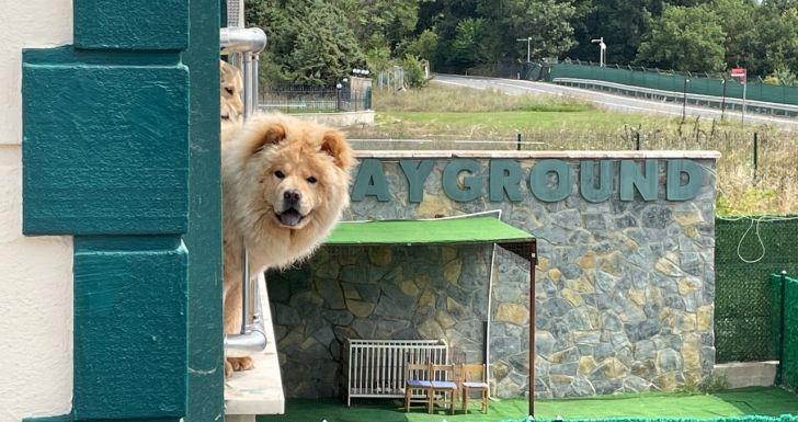 Pembatasan Sosial Berakhir, Anjing pun Lepaskan Stres di Hotel