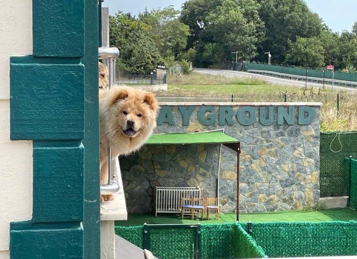 Photo of Pembatasan Sosial Berakhir, Anjing pun Lepaskan Stres di Hotel
