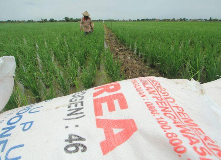 Photo of DPRD Sambas: Pastikan Distribusi Pupuk Subsidi Tepat Sasaran