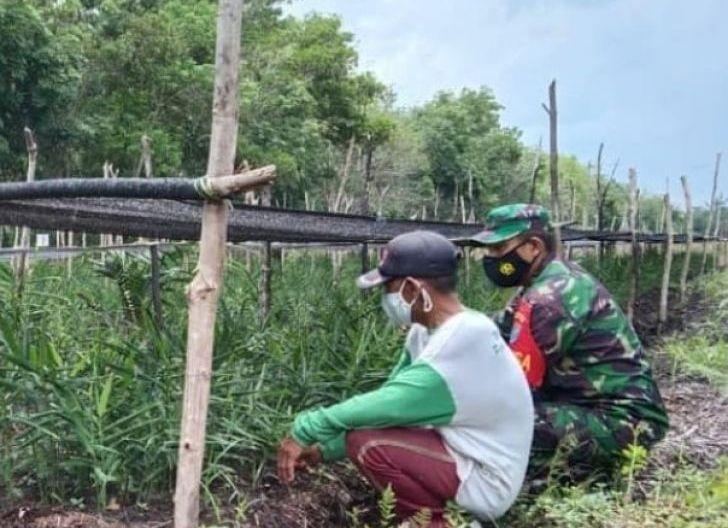 Photo of Dukung Ketahanan Pangan, Babinsa Teluk Empening Komsos dengan Petani Jahe