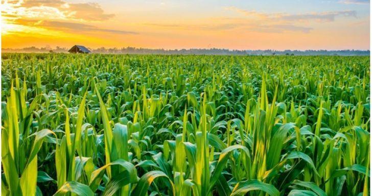 Sektor Pertanian Catatkan Prestasi Selama Pandemi Covid-19