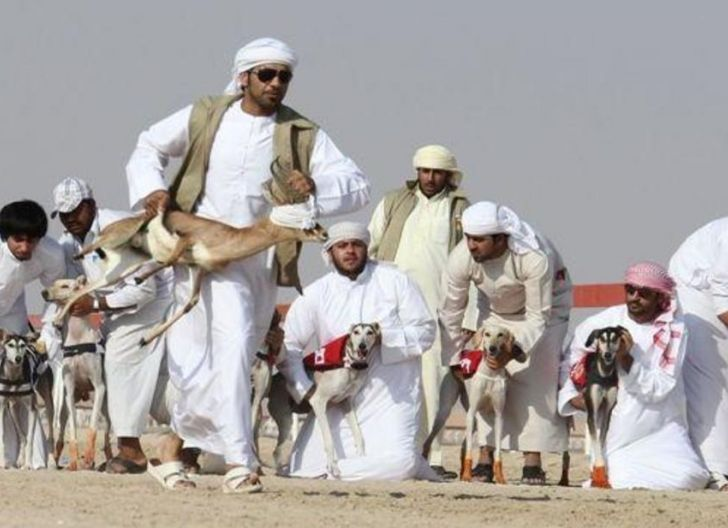 Photo of Saluki, Anjing Handramaut: Ribuan Tahun Disayang Pribumi Jazirah Arab